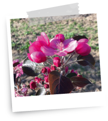 fleur redlove
